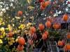 Tham quan vườn hồng Lễ Vân Đà Lạt
