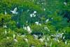 Vườn cò Bằng Lăng, Cần Thơ