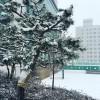 Tự do khám phá mùa đông Hàn Quốc theo cách của bạn