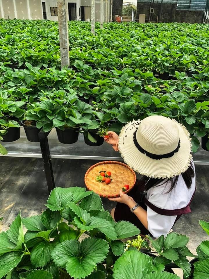Tour dành cho gia đình nhỏ - Trải nghiệm một ngày làm nông dân Đà Lạt