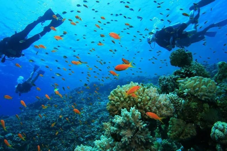 Tour riêng lặn biển Nha Trang kèm hướng dẫn viên