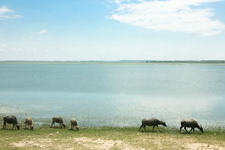 Hồ Dầu Tiếng, Tây Ninh