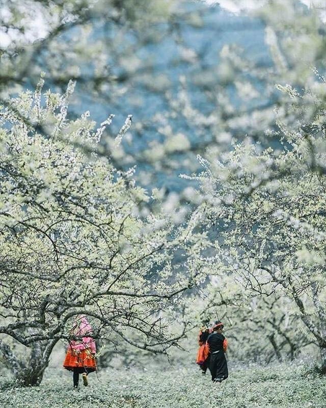Tour 2 ngày 1 đêm khám phá cao nguyên xinh đẹp Mộc Châu