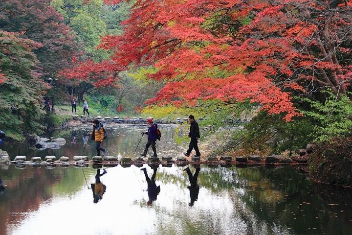 Xe riêng khám phá Chungcheong, Gyeongsangbuk, Jeollabuk