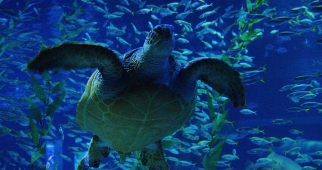 Thủy cung Sea Life Busan Aquarium