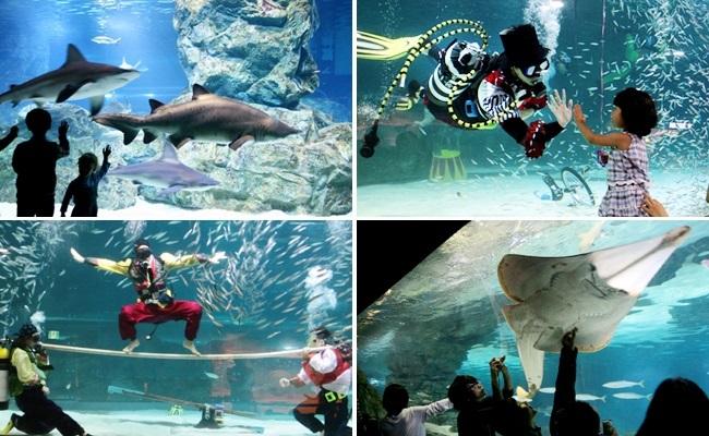 Thủy cung Coex Aquarium Seoul