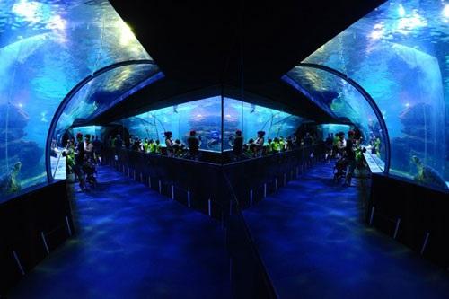 Thủy cung Aqua Planet ở Jeju