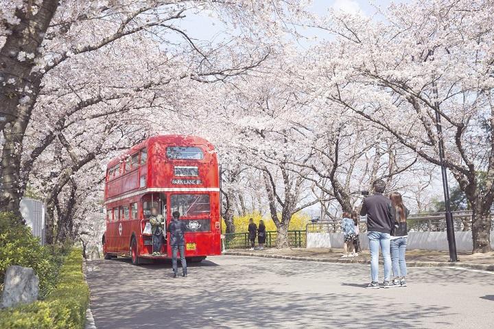 City Bus Tour tham quan Daegu