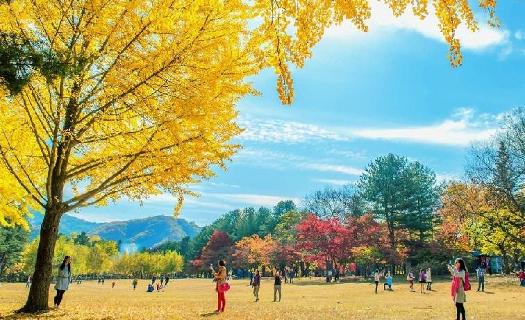 Tour 1 ngày Đảo Nami Và Núi Seorak từ Seoul