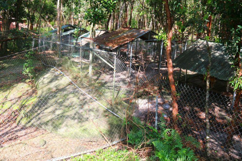 Trung tâm bảo tồn Chó Xoáy Phú Quốc