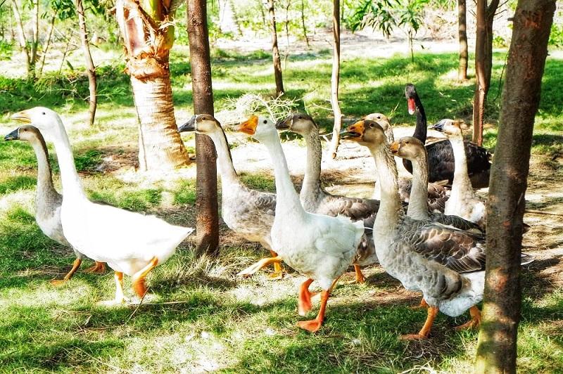 FLC Zoo Safari Park Quy Nhơn